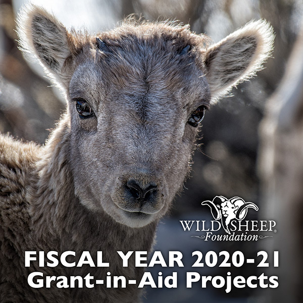 MISSION FUNDING:  FY2020-21 Grant-in-Aid Projects