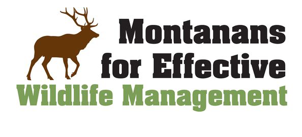 Wild Sheep Foundation Opposes Proposed Trapping Ban in Montana