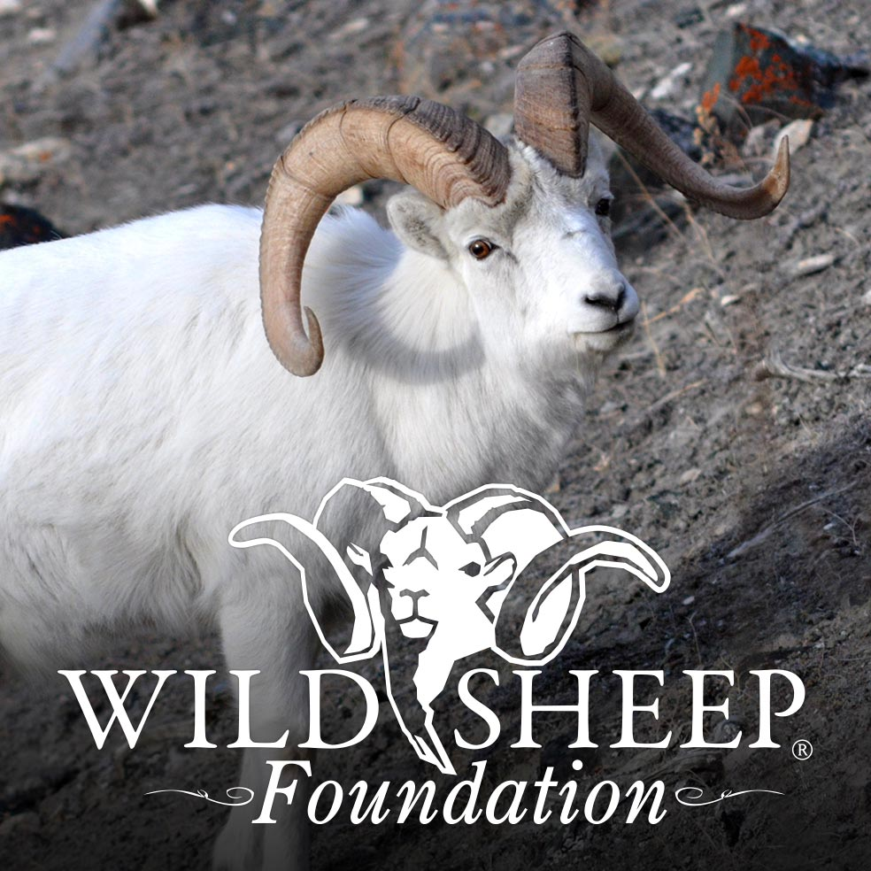 Deadly Pathogen Confirmed for First Time in Alaska Dall's Sheep and Mountain Goats