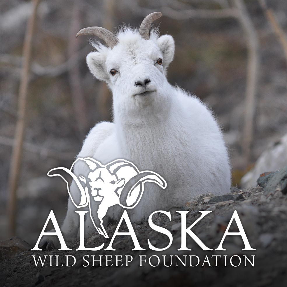 Dall Sheep in Talkeetna Mountains Test Positive for Deadly Foreign Pathogen - Alaska Wild Sheep Foundation Calls for Mandatory Disease Testing of Domestic Sheep and Goats